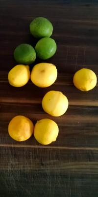 lemons_main